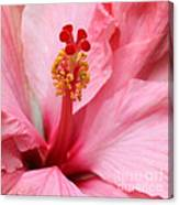 Hibiscus Flower Close Up Canvas Print