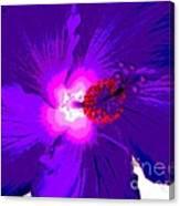 Hibiscus - Flower - Ile De La Reunion - Reunin Island Canvas Print