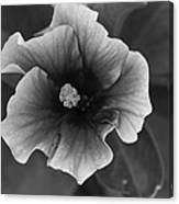 Hibiscus In Black And White Canvas Print