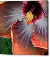 Hibiscus Key Largo Canvas Print