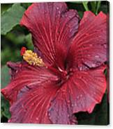 Hibiscus Night Fire 2 Of 2 Canvas Print