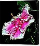Hibiscus On Black - Three Canvas Print