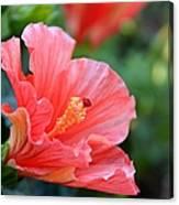Hibiscus Summer Canvas Print
