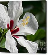 Hibiscus White Wings Canvas Print