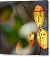 Hidden Forest Leaves Canvas Print
