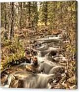 Hidden Forest Treasure Canvas Print