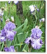 Hidden Iris Canvas Print