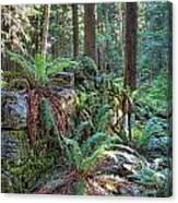 Hidden Rock Wall Canvas Print