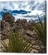 Hidden Valley Yuccas Canvas Print