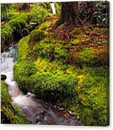 Hidden Woodland Corner. Benmore Botanical Garden. Scotland Canvas Print
