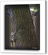 Hide And Seek Squirrels Canvas Print