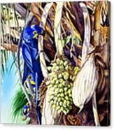 Hide-n-seek Hyacinths Canvas Print