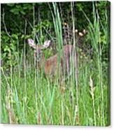 Hiding Deer Canvas Print