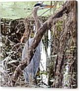 Hiding Heron Canvas Print