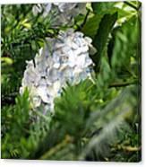 Hiding Hydrangea Canvas Print