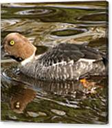Hiding In Brown Waters Canvas Print
