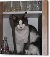 Hiding In The Cabinet Canvas Print