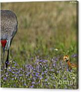 Hiding In The Flowers Canvas Print