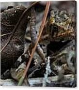 Hiding In The Leaf Litter Canvas Print
