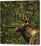 Hiding In The Woods Canvas Print