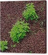 High Contrast Plantlife Canvas Print
