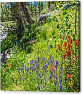 High Country Wildflowers Canvas Print