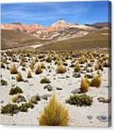High In The Chilean Altiplano Canvas Print