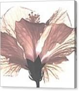 High Key Hibiscus Canvas Print
