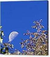 High Moon Canvas Print