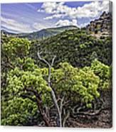 High Peaks Trail View Canvas Print