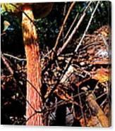 High Rise Fungi Canvas Print