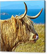 Highland Beauty Canvas Print