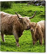 Highland Cattle And Calf Canvas Print