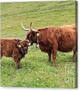 Highland Caws Canvas Print
