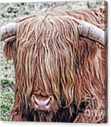 Highlands Coo Canvas Print