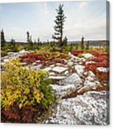 Highlands Of West Virginias Dolly Sods Canvas Print