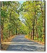 Highway In The Forest Canvas Print