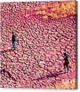 Hiking On The Cracked Purple Earth Canvas Print