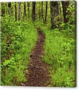 Hiking Through The Blue Ridge I Canvas Print