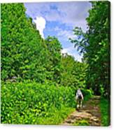 Hiking Trail Along Rivier Du Nord In The Laurentians North Of Montreal-qc Canvas Print