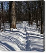 Hiking Trail Shadows Canvas Print