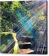 Hiking Trail Sun Flares Canvas Print