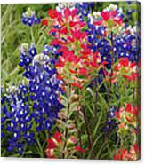 Hill Country Bloom Canvas Print