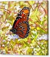 Hill Country Butterfly Canvas Print