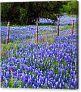 Hill Country Heaven - Texas Bluebonnets Wildflowers Landscape Fence Flowers Canvas Print