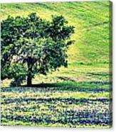 Hill Country Scenic Hdr Canvas Print