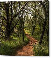 Hill Country Trail Canvas Print