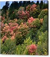 Hill Side Colors Canvas Print