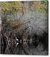 Hillsborough Egret 01 Canvas Print