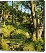 Hillside Forest Canvas Print